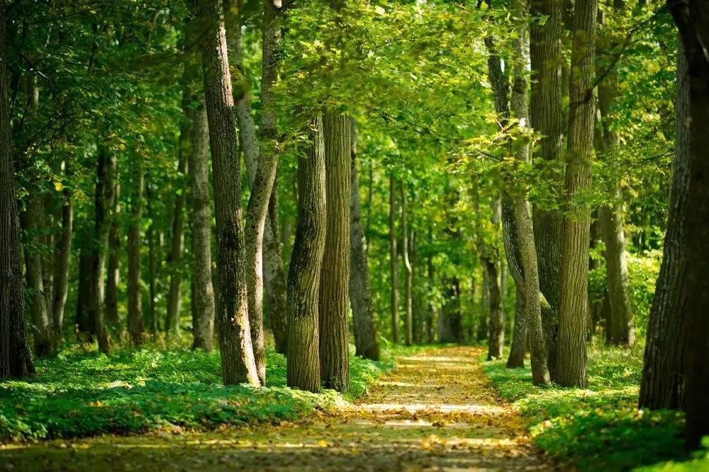 森林商城图片素材